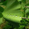 foliage-2471258_1920